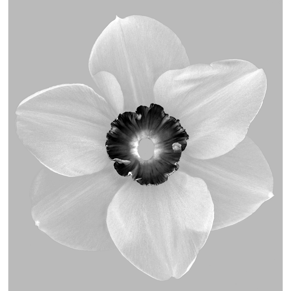 Paul Solberg - Blossom Dearie
